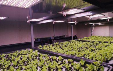 модули освещения для садоводства