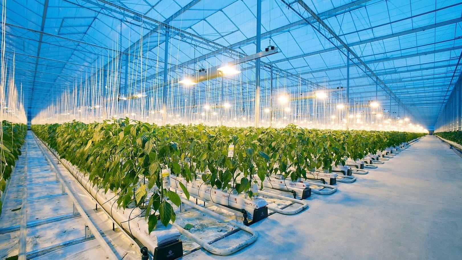 фито-светильники для растений